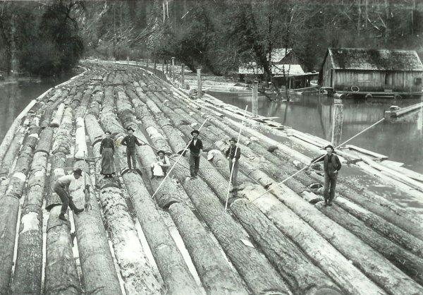 Walnut Timber From Arkansas Lost Art Press