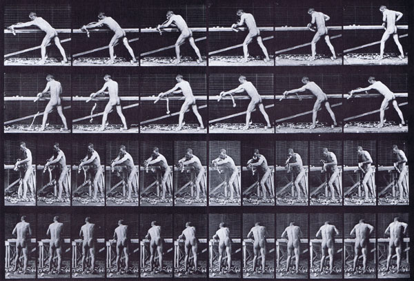muybridge_plate_379_small