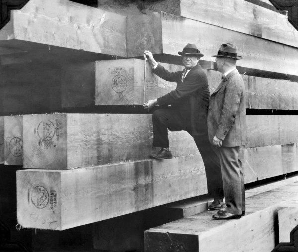timber_measure