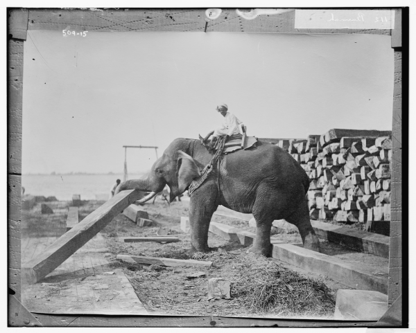 elephants_at_work