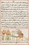 Arabic, 1669 (BnF Gallica, Paris).