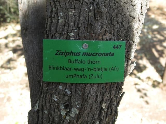 buffaloThornSign